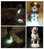 Dog Light, Dog Collar Light, Bubba's Leash Light