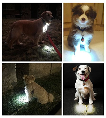 Oh You Lucky Dog! Dog Light, Dog Collar Light, Bubba's Leash Light - 6 Lights - For Dog Walks & Backyard Monitoring. Attach to Leash, Dog Collar, Harness. For Small (Ez Clip Front)