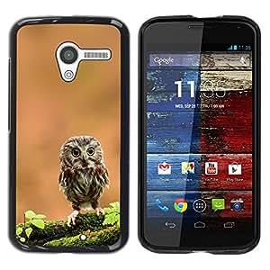 PC/Aluminum Funda Carcasa protectora para Motorola Moto X 1 1st GEN I XT1058 XT1053 XT1052 XT1056 XT1060 XT1055 The Curious Cute Owl / JUSTGO PHONE PROTECTOR
