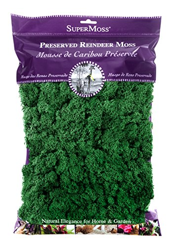 SuperMoss (21757) Reindeer Moss Preserved, Forest, 8oz (200 cubic inch) ()