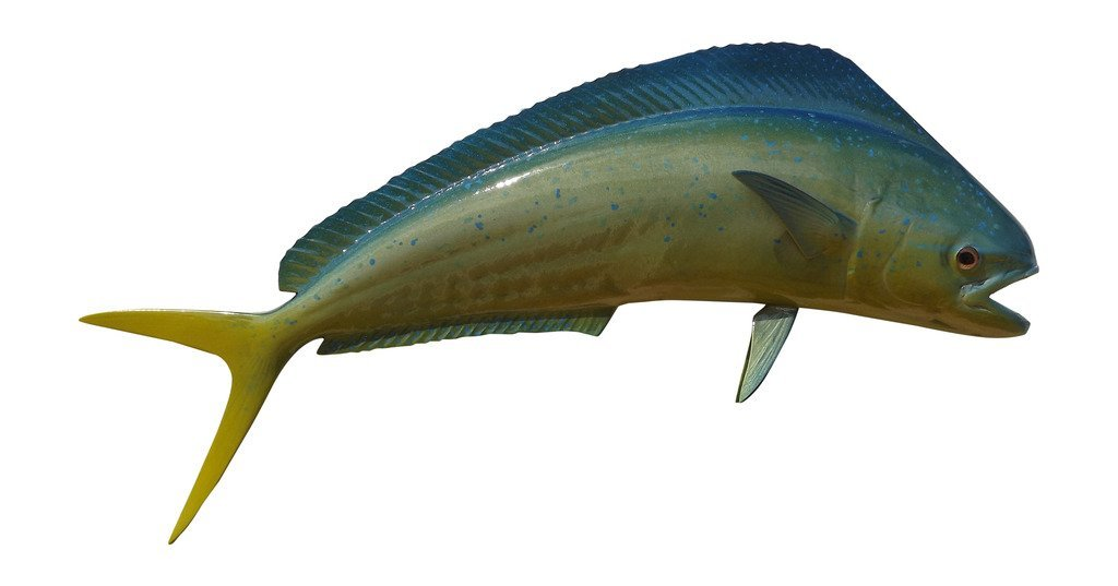 22'' Bull Dolphin Two Sided Fish Mount Replica, Affordable Home Decor - Indoors Or Outside.