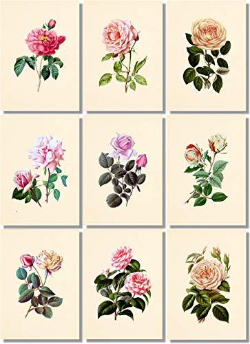 (Flower Wall Art - Vintage Pink Roses Botanical Prints (Set of 9) - 5x7 - Unframed - Floral Decor)