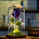 Rose-in-Glass-Dome-with-LightsMoss-Micro-LandscapeBedside-LampNovelty-Gifts-for-Valentines-Day-Anniversary-Birthday-Wedding
