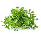 Curled Cress Seeds - 4 Oz - Non-GMO, Organic, Heirloom, Sprouting Seeds for Growing Microgreens, Gardening Baby Salad Greens (AKA: Peppergrass)