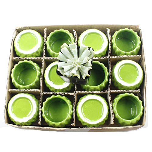 Set of 12 Small 2-Inch Bright Accented Ceramic Planter Pots - Ideal for Single Stalk Roses or Flowers, Lucky Bamboo, Air Plants, or Small Succulents and House Plants (Green)