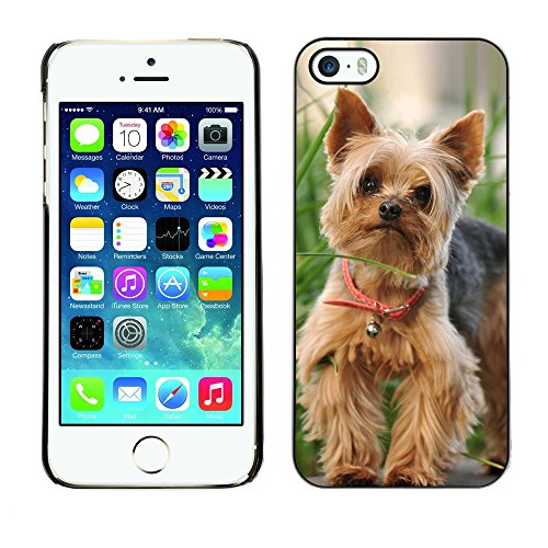 [ For APPLE IPHONE 5 / 5S ][ Xtreme-Cover ][ Coque Rigide Case Cover ] - Cute Happy Yorkie Terrier