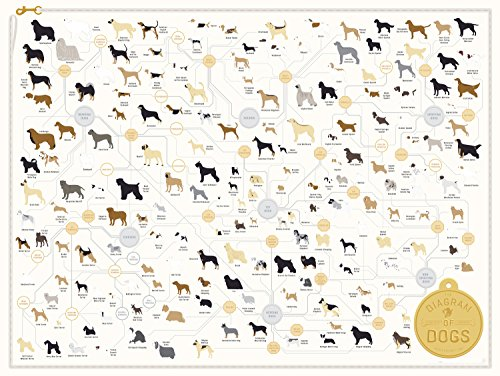 (Pop Chart The Diagram of Dogs Poster Print, 24