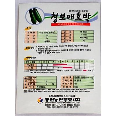 Puapkin Seeds Korean 2pack : Pumpkin Plants : Garden & Outdoor