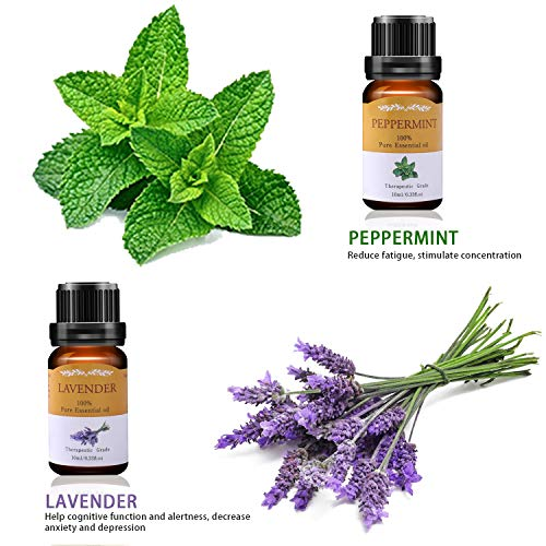 VSADEY Essential Oils Set, Top 6 Aromatherapy Essential Oil for Diffuser, Massage, Skin and Hair Care - Lavender, Peppermint, Eucalyptus, Lemongrass, Tea Tree and Orange Sweet 100% Pure, 6 x 10ml
