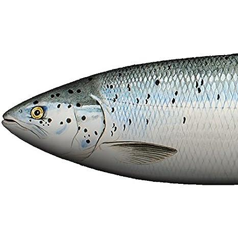 Fladen pesca salmón Puffa pescado – 62 x 16 x 11 cm), color imitación
