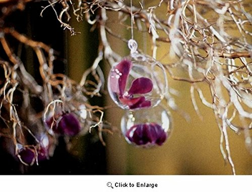 2 3/4'' Hanging Glass Globe, Terrarium Candle Holder Bulk   Sold by Case of 6   2 day sale only