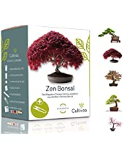 Cultivea Mini - Bonsai Ready-to-Grow Kit - Franse zaden 100% ecologisch - Tuinieren en decoreren - Cadeau-idee (Rode Appel, Chinese Cercis, Juniperus, Liquidambar, fijnspar)