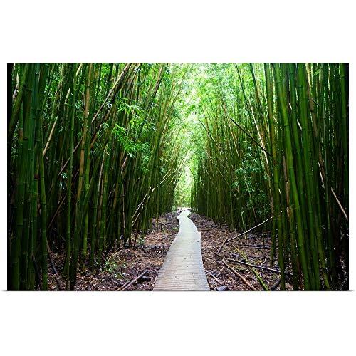 GREATBIGCANVAS Poster Print Entitled Boardwalk Passing Through Bamboo Trees, Hakeakala National Park, Maui, Hawaii by Panoramic Images 18