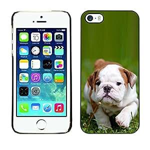 PC/Aluminum Funda Carcasa protectora para Apple Iphone 5 / 5S Boston Bulldog Terrier Puppy Green Summer / JUSTGO PHONE PROTECTOR