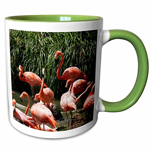 3dRose Danita Delimont - Peter Bennett - Birds - San Diego Zoo, Flamingo, California, USA - 11oz Two-Tone Green Mug - Diego California Outlet San