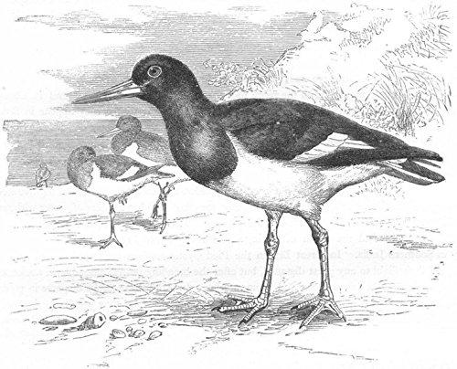 antique pie bird - 6