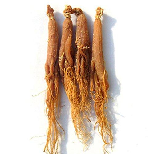 6~7 Years Whole Asian Panax Korean Red Ginseng Roots, Rare, Korean Panax 250g (8.8 Oz)