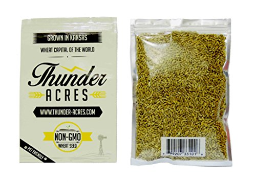 - Non-GMO, Thunder Acres Premium Wheat Seed, Cat Grass Seed, Wheatgrass, Hard Red Winter Wheat (2 lbs.)