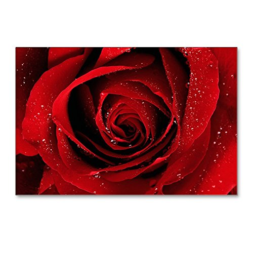 Postcards (8 Pack) Red Rose