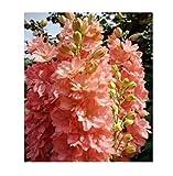 20x Orange F1Giant Delphinium Cultorums Delphinium Seeds Plant # 291