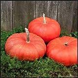 Cinderella Pumpkin Seeds, 10+ Premium Heirloom Seeds, A Must Have Pumpkin in Your Garden! Rouge VIF d'Etampes (Isla's Garden Seeds), Non GMO, 85-90% Germination Rates, Seeds