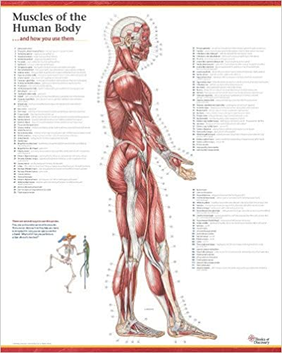 Anatomy Free Ebooks Pdf Download Sites Page 2