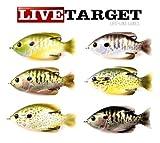 LiveTarget Sunfish Hollow Body Fishing Bait with Topwater Depth & #4/0 Hook