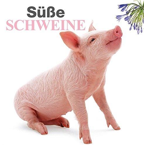 Süße Schweine: Ein Bildband mit den schönsten Aufnahmen von schlauen Schweinen und süßen Ferkeln
