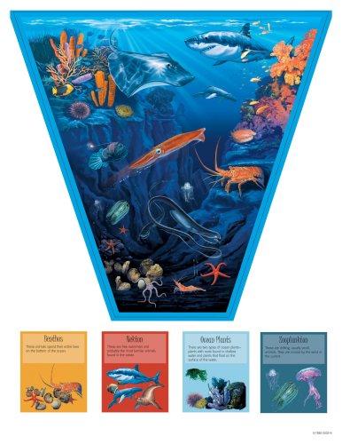 Download Bodies of Water: Salt Water Bulletin Board Set PDF