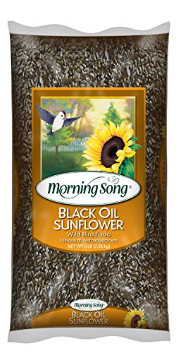 Morning-Song-11997-Black-Oil-Sunflower-Wild-Bird-Food-5-Pound