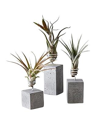 EVRGREEN Luftpflanzen Tisch-Deko Tillandsien Mix mit anthrazit Design-Beton  Halterung Pflegeleichte Pflanze für Innen - Set