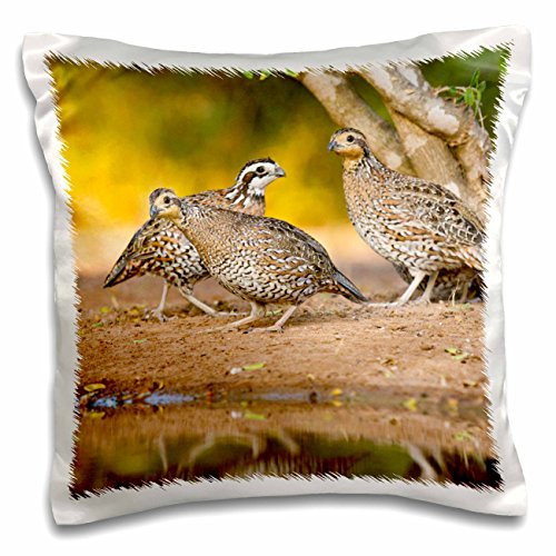 3dRose pc_146690_1 Northern Bobwhite Quail Bird, Emerging from Cover-Us44 Ldi0553-Larry Ditto-Pillow Case, 16 by 16
