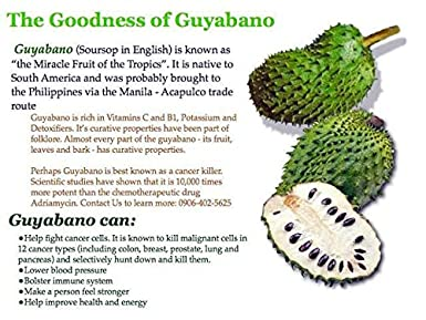 las hojas de guyabano pueden curar la diabetes