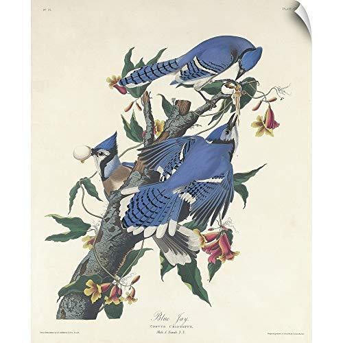 """CANVAS ON DEMAND John James Audubon Wall Peel Wall Art Print Entitled Blue Jay, 1831 10""""x12"""""""