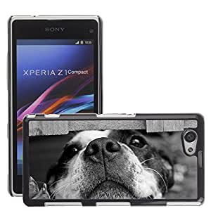 Super Stella Slim PC Hard Case Cover Skin Armor Shell Protection // M00145652 Dog Cute Pet // Sony Xepria Z1 Compact D5503