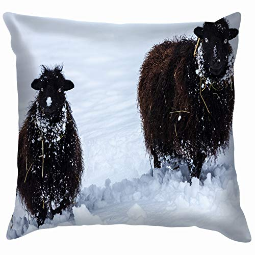 Two Cheeky Black Ouessant Sheep Snowy Animals Wildlife