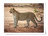 Leopard Profile - Wildlife Photograph Animal Picture Home Decor Wall Nature Print - Variety of Size Available
