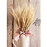 Hot New 100 natural dried flowers wheat ear for DIY crafts decor flores pography flowers home decoration