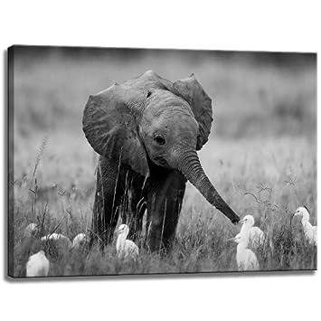 Baby Elefant Schwarzweiss Motiv Mit Farbelementen Auf Leinwand Im