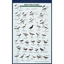 Mac's Field Guides: Northwest Coast Water Birds
