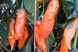 Aji Pepper Plants Combo #1 Rare!