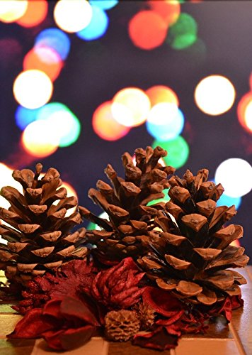 Pinecone Four Light - Laminated Poster Christmas Pine Ornaments Lights Pine Cones Poster 24x16 Adhesive Decal