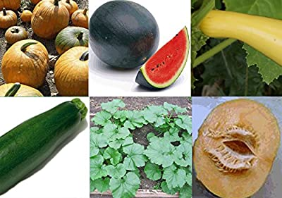 Set of 6 Heirloom Seed Packets- Cantaloupe, Watermelon, Pumpkin, Squash, & 2 Kinds of Zucchini