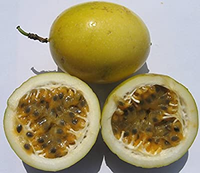 Yellow Passion Flower Seeds - Edible Fruit - Tropical Passiflora Vine - 10 Seeds