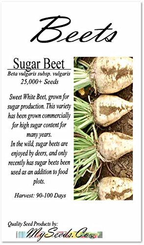 1 LB (25,000+ Seeds) Sugar Beet Seed - Sweet White Beet, grown for sugar production - 90-100 Days til Harvest - Non-GMO Seeds By MySeeds.Co (1 LB Sugar Beet)