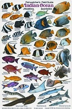 Fishwatcher's Field Guide to the Indian Ocean, Maldives & the Seychelles - New Submersible Fish ID Card & Pocket Guide for Scuba Divers, Snorkelers & Fishermen (Indian Ocean Scuba)