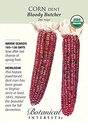 Organic Bloody Butcher Dent Corn Seeds - 12 grams