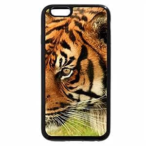 iPhone 6S Plus Case, iPhone 6 Plus Case, Tiger