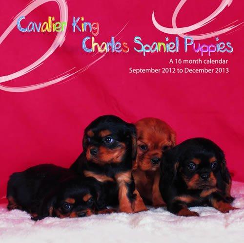 Spaniel 2013 Calendar - Cavalier King Charles Spaniel Puppies 2013 Calendar #MGDOG15