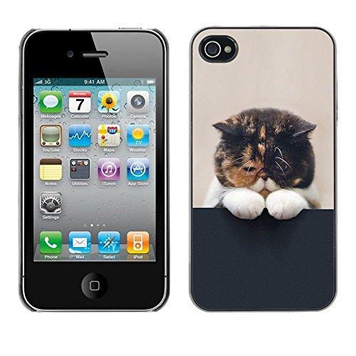 GooooStore/Housse Etui Cas Coque - Cute Sleepy Kitten Cat Pet Feline Paw - Apple iPhone 4 / 4S